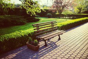 A bench in a neat park