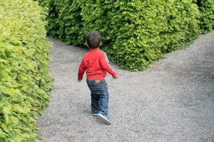 Kid in a hedge maze